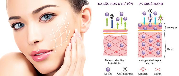 Collagen-c-1-3