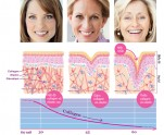 vai_tro_cua_collagen_elastin copy