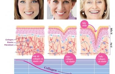 vai_tro_cua_collagen_elastin copy
